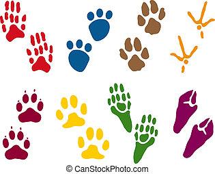 voetspooren, acht, dier, stellen