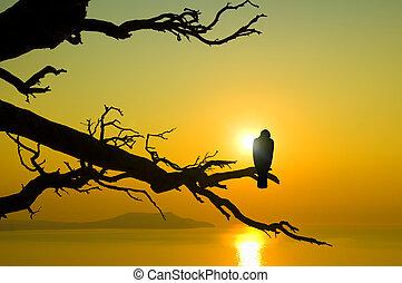 vogel, auf, zweig, auf, sonnenuntergang