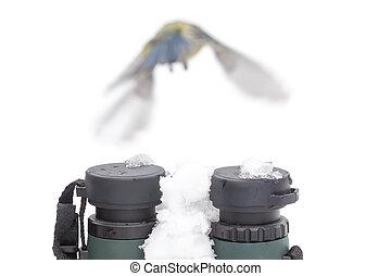 vogel- aufpassen, begriff, in, winter