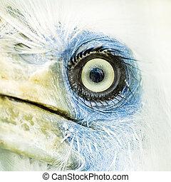 vogel, auge, closeup