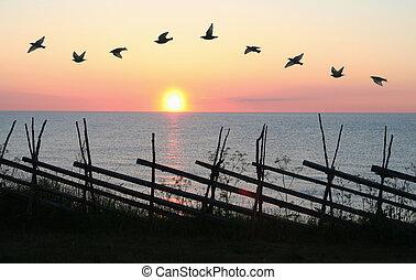 vogel, formatie, in, ondergaande zon