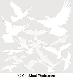 vogel-gruppe