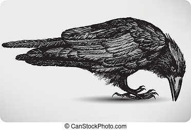 vogel, illustration., vektor, schwarz, hand-drawing., rabe