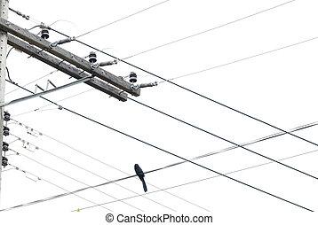 vogel, in, de, drijf lijnen aan