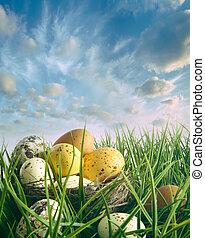 vogel- nest, mit, gesprenkelt, eier, in, der, gras