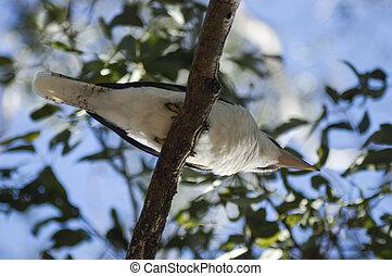 vogel, sitiing, op een tak
