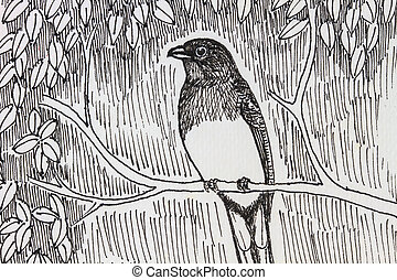 vogel, tekening