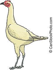 vogel, vector, illustratie