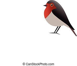 vogel, vektor, rotkehlchen, clipart