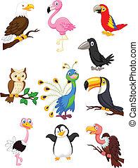 vogel, verzameling, spotprent