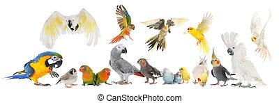 vogels, groep