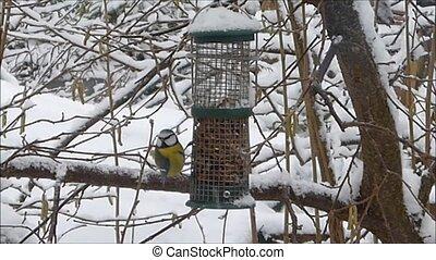 vogels, het voeden