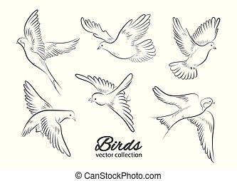 vogels, illustration., achtergrond., vector, set, witte ,...