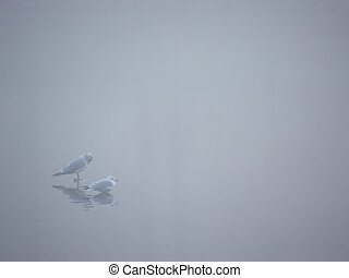 vogels, in, de, mist, 1