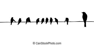vogels, op, draad