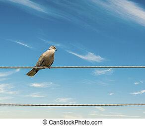 vogels, op, een, draad, hemel, achtergrond.