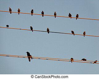 vogels, op, een, draad, kabel, afbeelding
