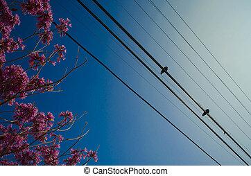 vogels, op, een, draad