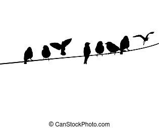 vogels, op, een, telefoondraad