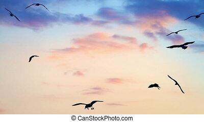 vogels, op, ondergaande zon