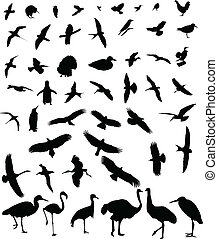 vogels, silhouette, verzameling