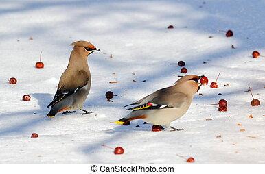 vogels, steppes