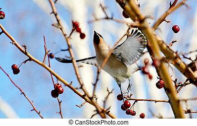 vogels, van, de, steppes