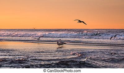 vogels, vroege morgen, op, de, oceanfro