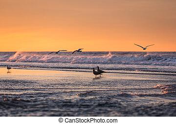 vogels, vroege morgen, op, de, oceanfront.