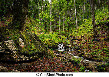 Vogelsang Gorge in Upper Austria on a cloudy day in summer