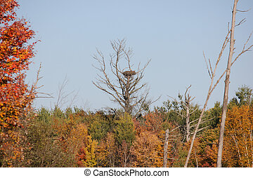 vogelstand nest