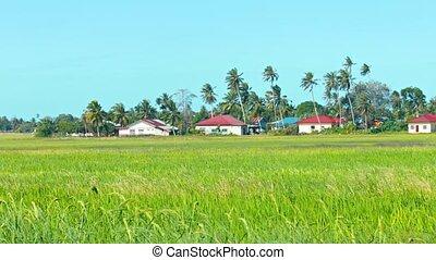 voisinage, moderne, sud-est, champs, riz, asie