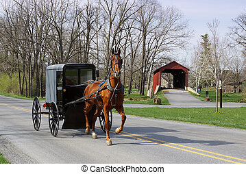 voiture, amish, cheval