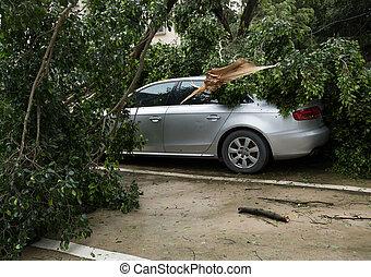 voiture, baissé, stationnement, arbre, voiture, porcelaine, mangkhut, sommet cassé, super, typhon, endommagé, après