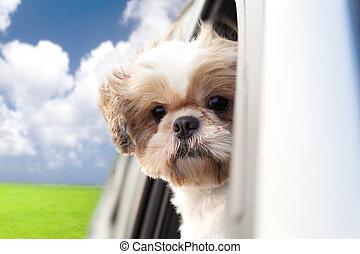 voiture, cavalcade, apprécier, chien