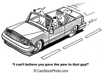 voiture, chien, conduite