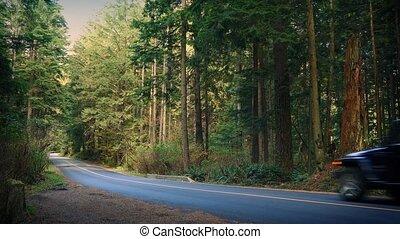 voiture, parc national, conduire, pick-up