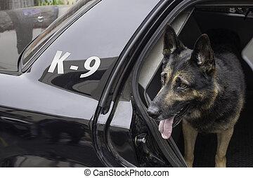voiture reconnaissance, police, k-9