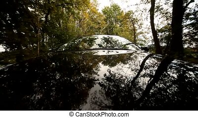 voiture, refléter, arbres