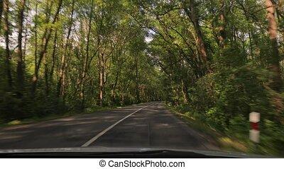 voiture, route, arbres, conduite