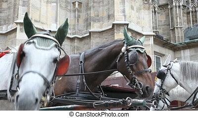 voiture, vienne, cheval
