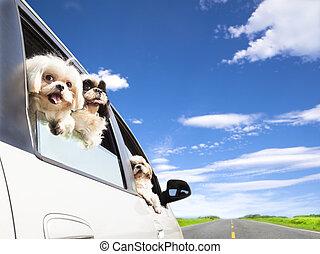 voiture, voyager, famille, chien