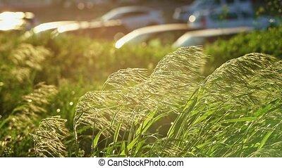 voitures, stipa, stationnement, en mouvement, lot, backlit, devant, herbe, vent