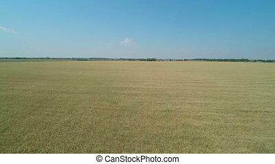 vol, blé, field., sur