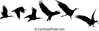 vol, oiseau, atterrissage