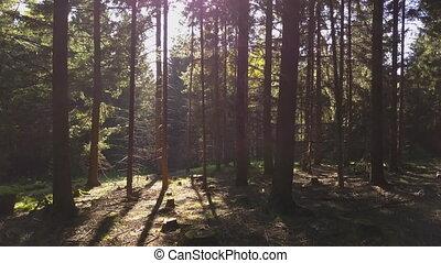 vol, par, aerial:, été, vibe, flamme, forêt, soleil