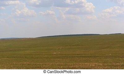 vol, sur, champ blé