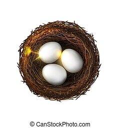 volaille, nest., oeufs, isolé, embryon, birdnest, oiseau