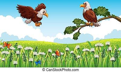 volare, aquile, fondo, giardino, natura, due, scena