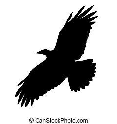 volare, illustrazione, fondo, vettore, bianco, uccello